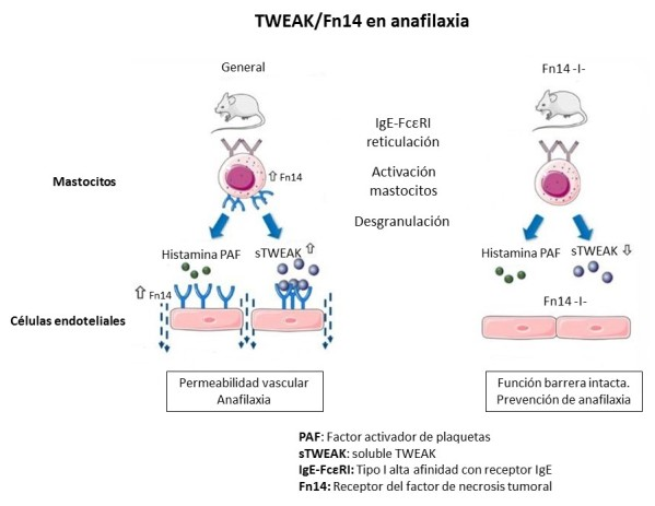 Estudio de anafilaxia